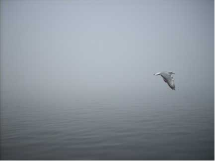 Lone Goose in flight